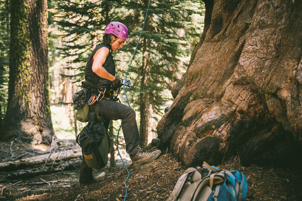 Baxter assembles and secures the proper gear before climbing to the top of a giant sequoia tree in Sequoia National Park.