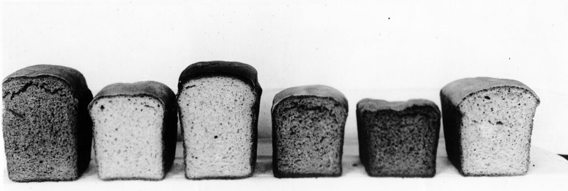 An assortment of bread containing different substitutes for wheat.