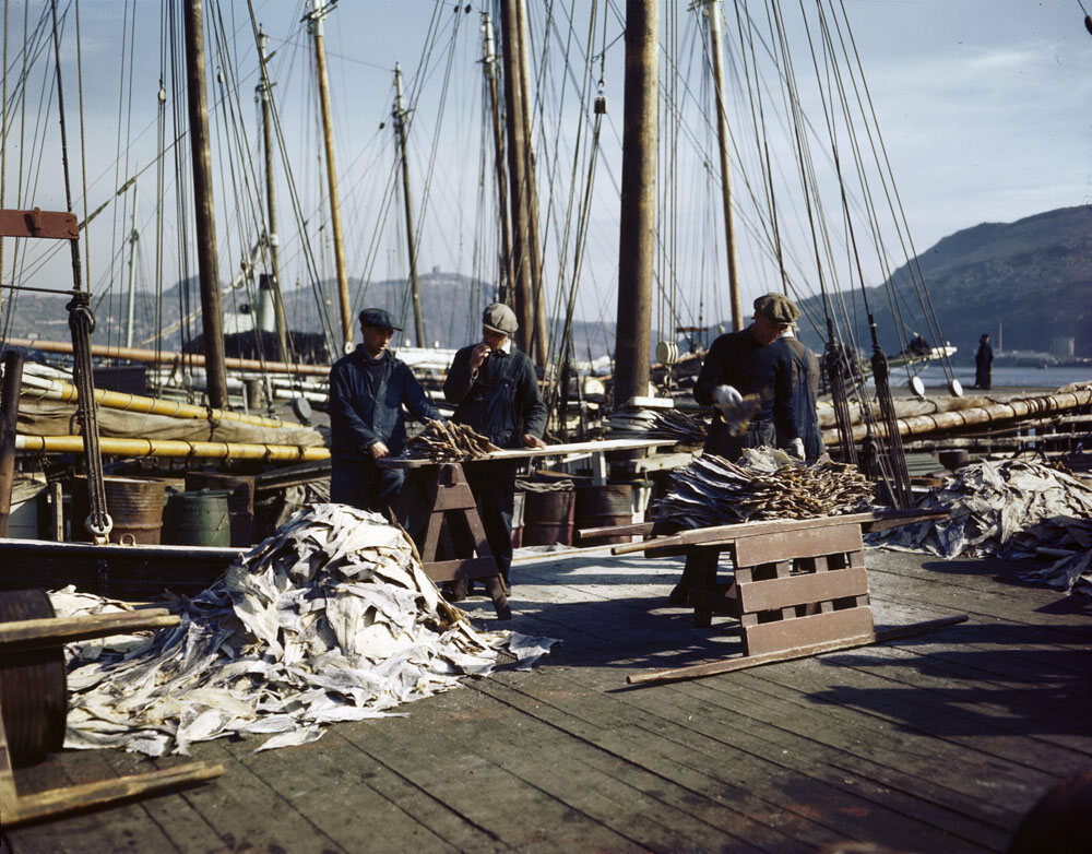Newfoundland fishermen on the dock with fishing schooners in the background, 1944.