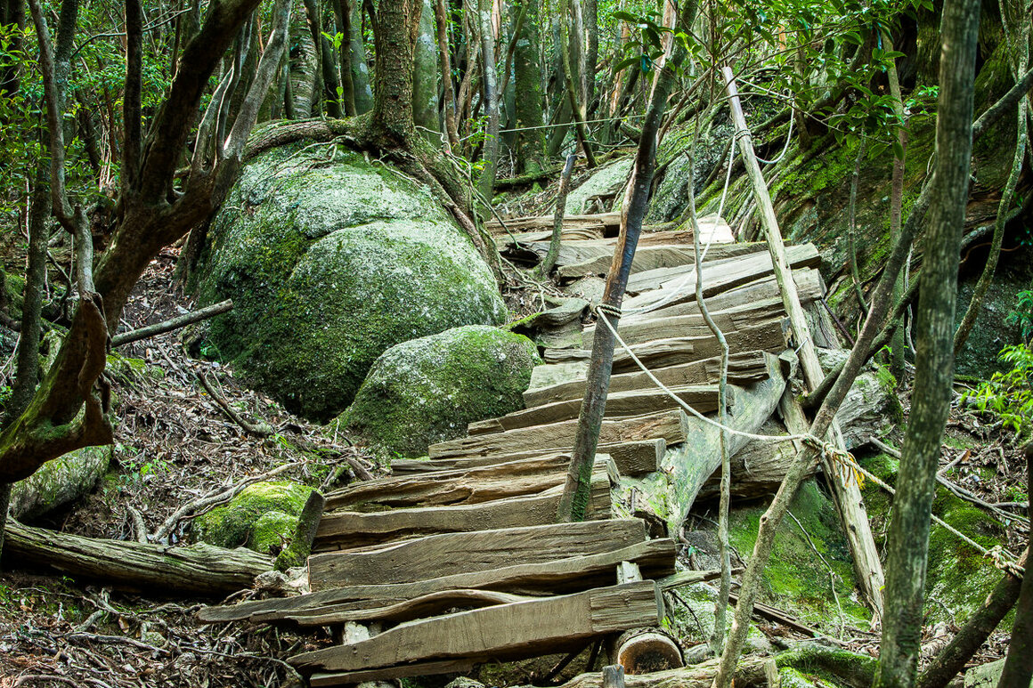 A steep portion of the trail is made easier by the placement of irregular planks of wood.
