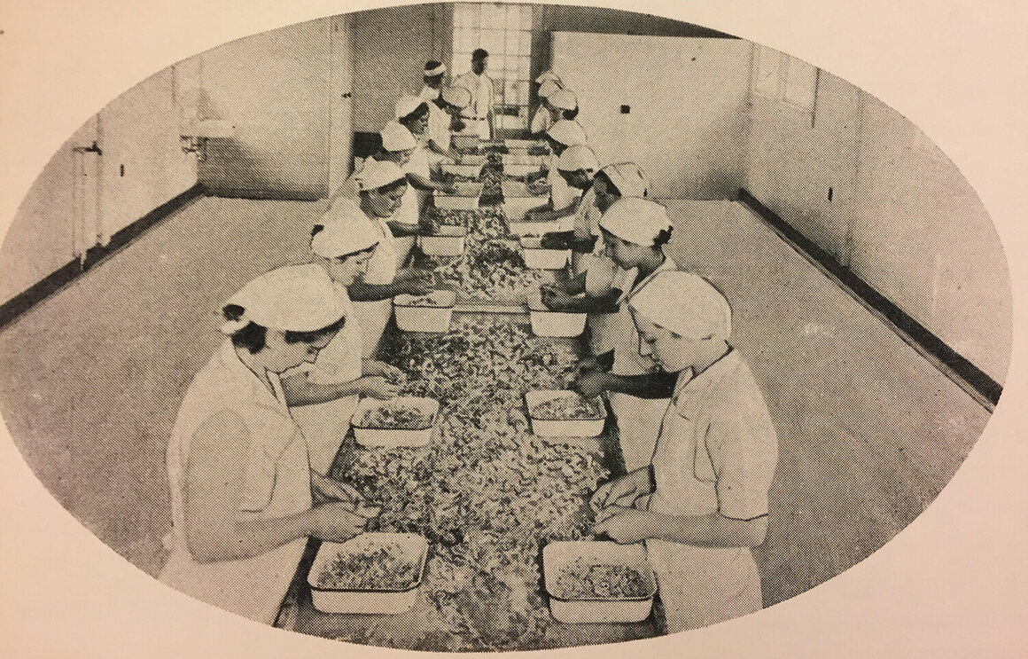 Workers picking frogs at the canning factory.
