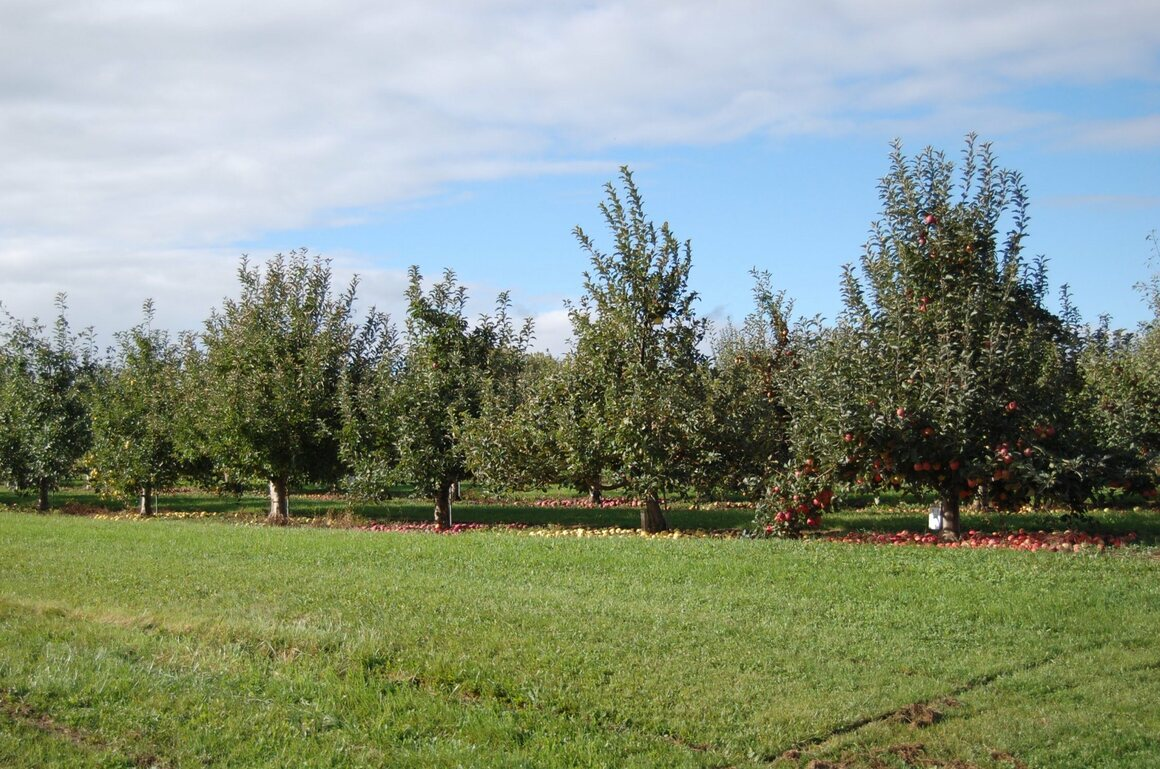 Brown has access to the USDA's apple collection, right by her own orchards.