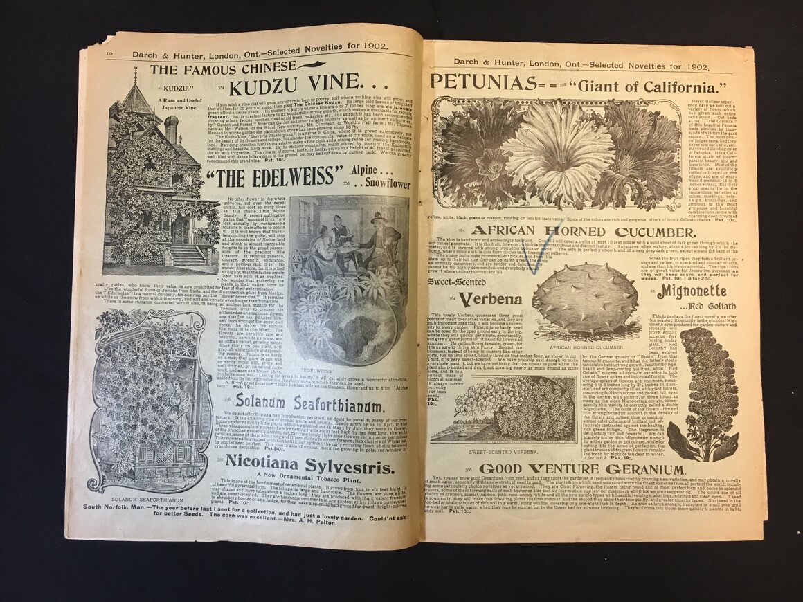 A glowing advertisement for kudzu—now considered to be a highly invasive plant—in a 1902 catalog.