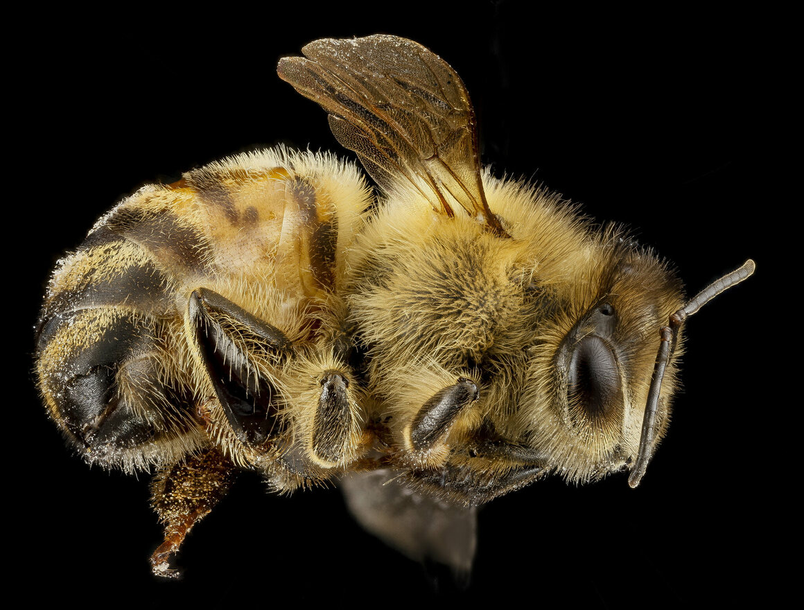 Regardless of outside temperature, bees maintain a temperature of 92–93 degrees Fahrenheit in their central brood nests.