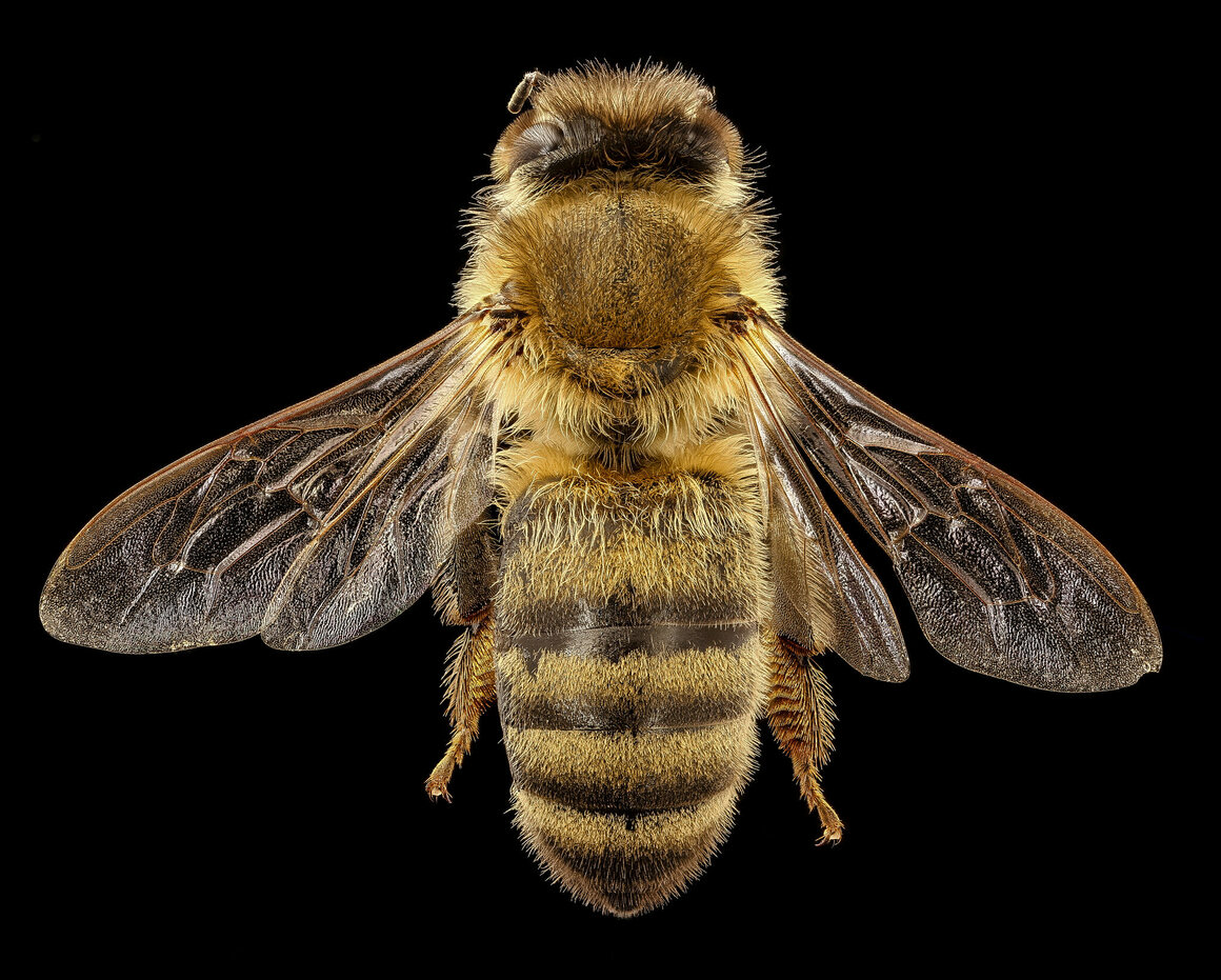 Of 20,000 species of bees, only four make honey.