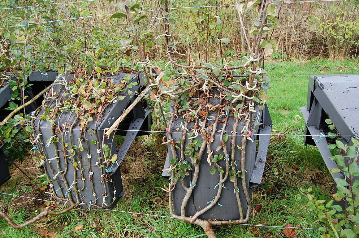 Tree chairs grow around frames.