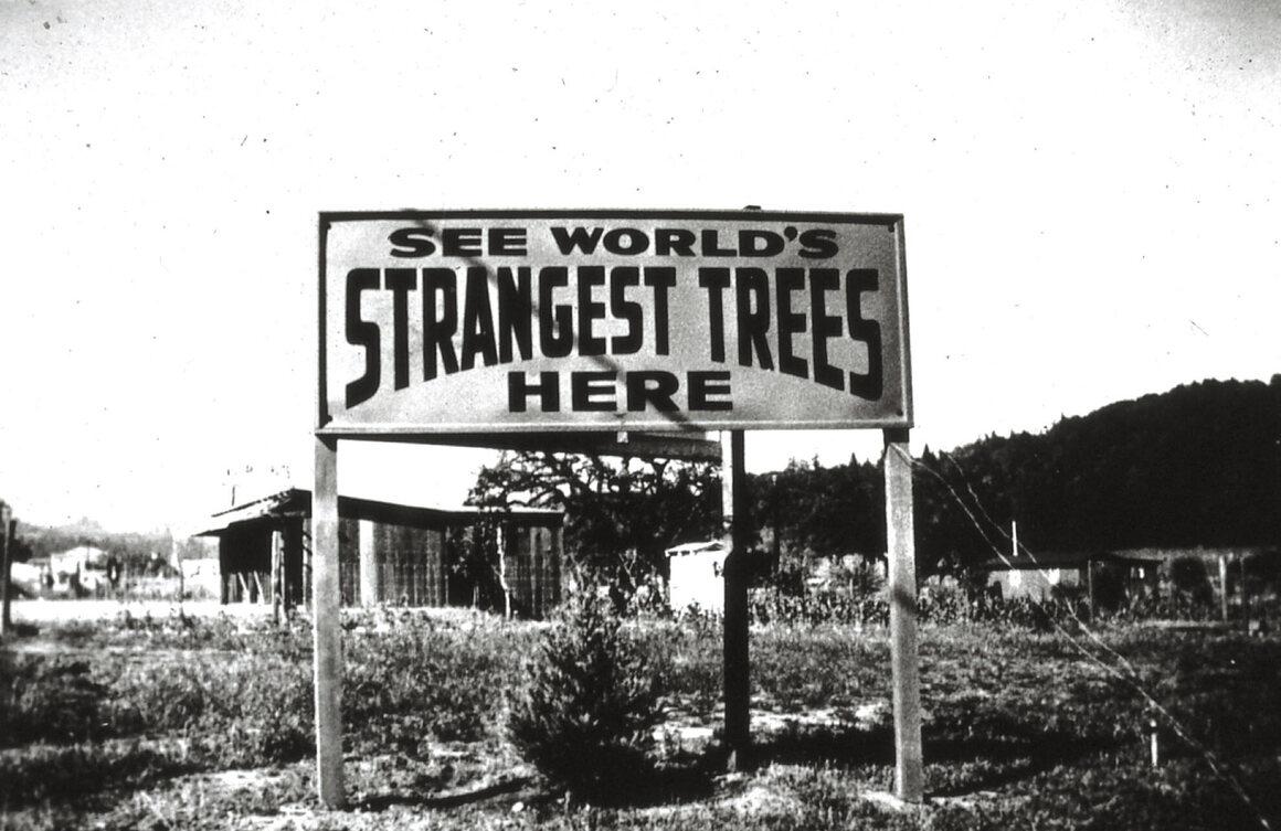 "Erlandson's ""Tree Circus"" beckoned visitors."
