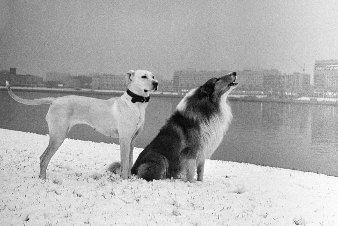 <em>Leningrad</em>, 1977.