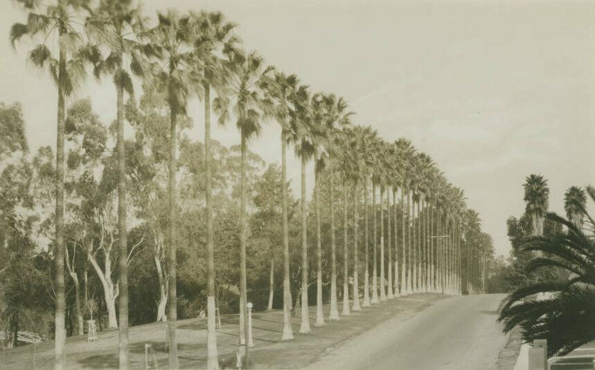 Palm trees line a street in Hollenbeck Park.