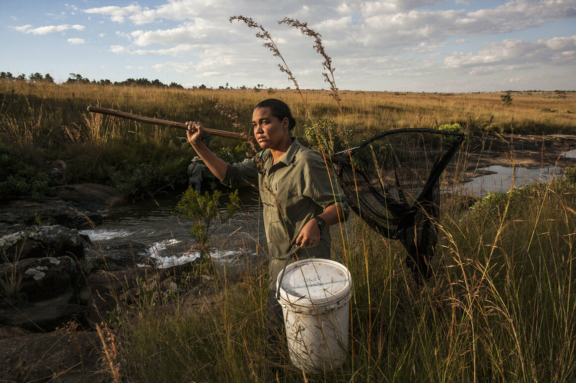 Adjany Costa collects plant and water samples near the source of the Cubango River.