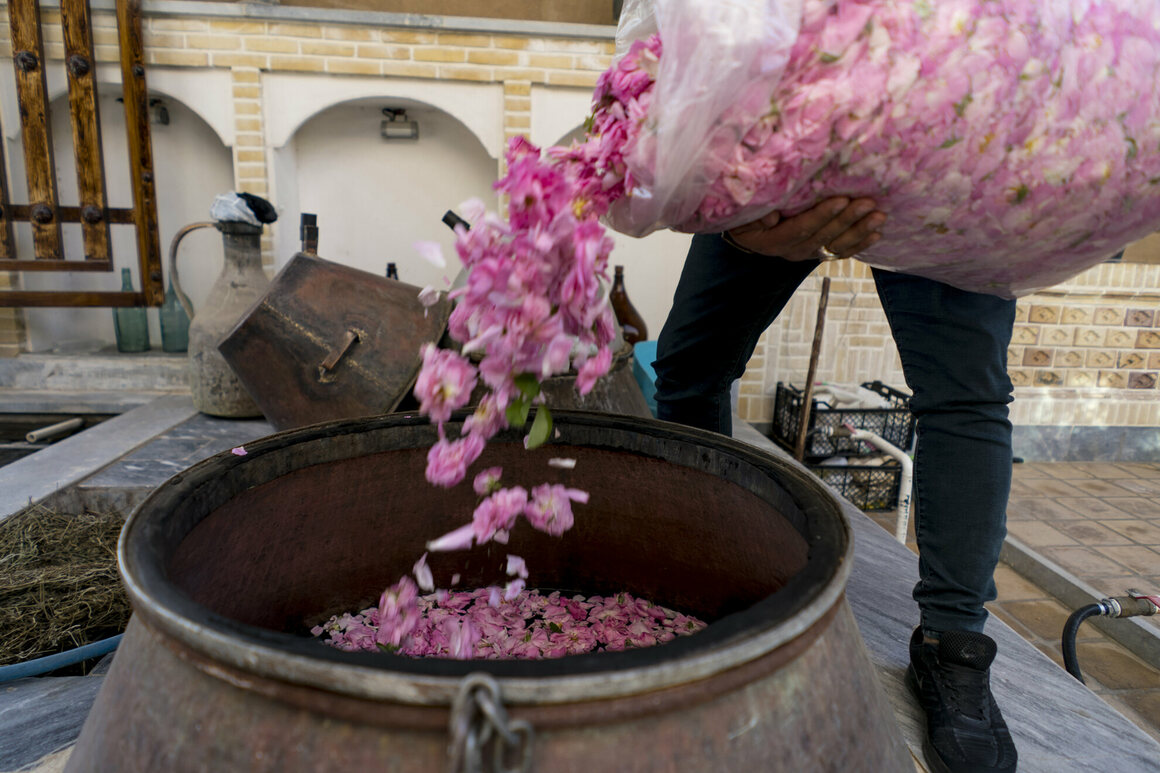 Freshly picked flowers are poured into a copper still.