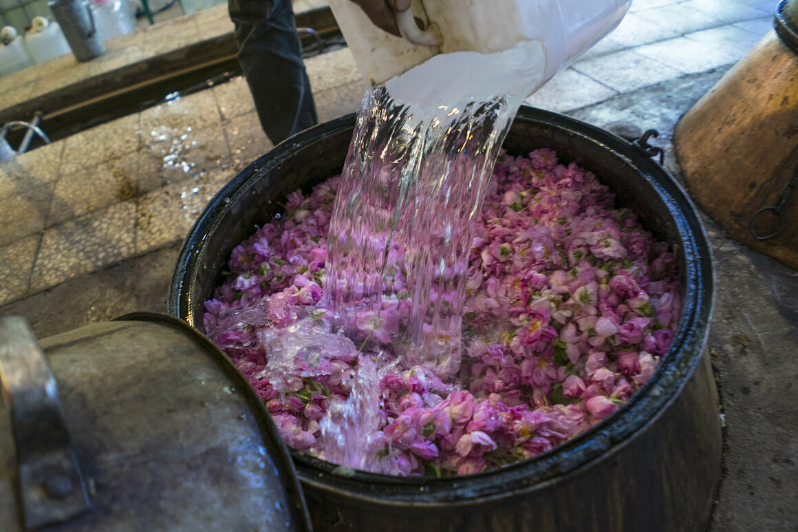 Cold water is added to the rose petals.