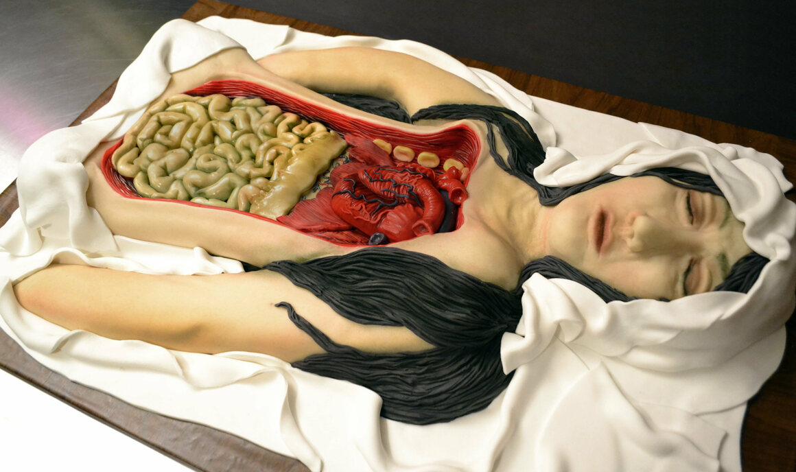 Edible anatomy.
