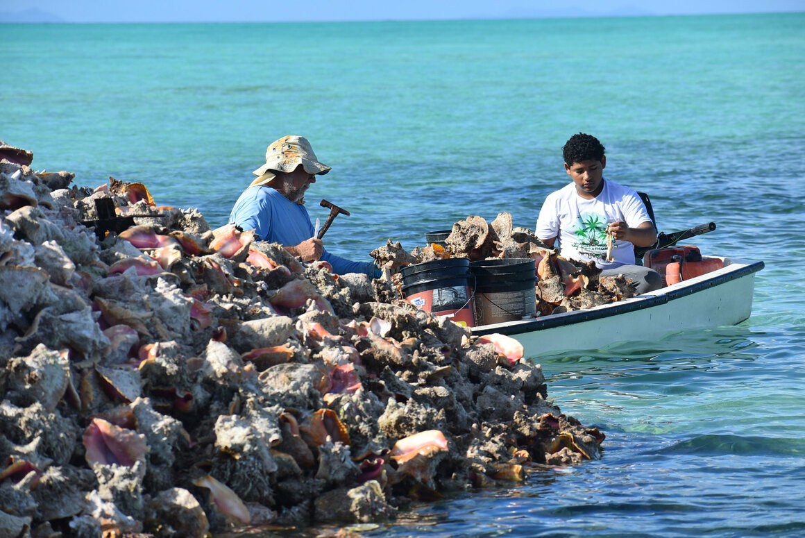 Local fishermen amid the towering conch shells.