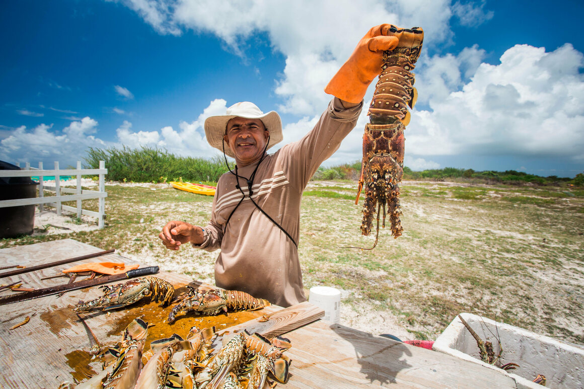 Conch and lobster are the stars of the British Virgin Islands' seafood scene.