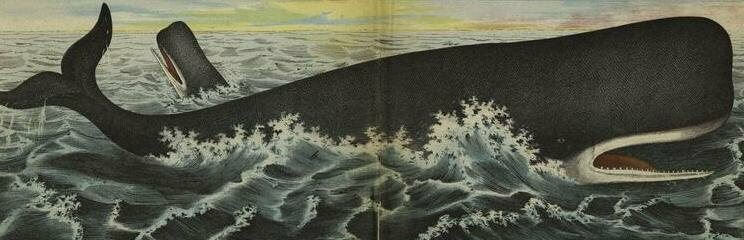 The Moby Dick Musical Is Swimming With Sea Shanties And Nurdle Ballads Atlas Obscura
