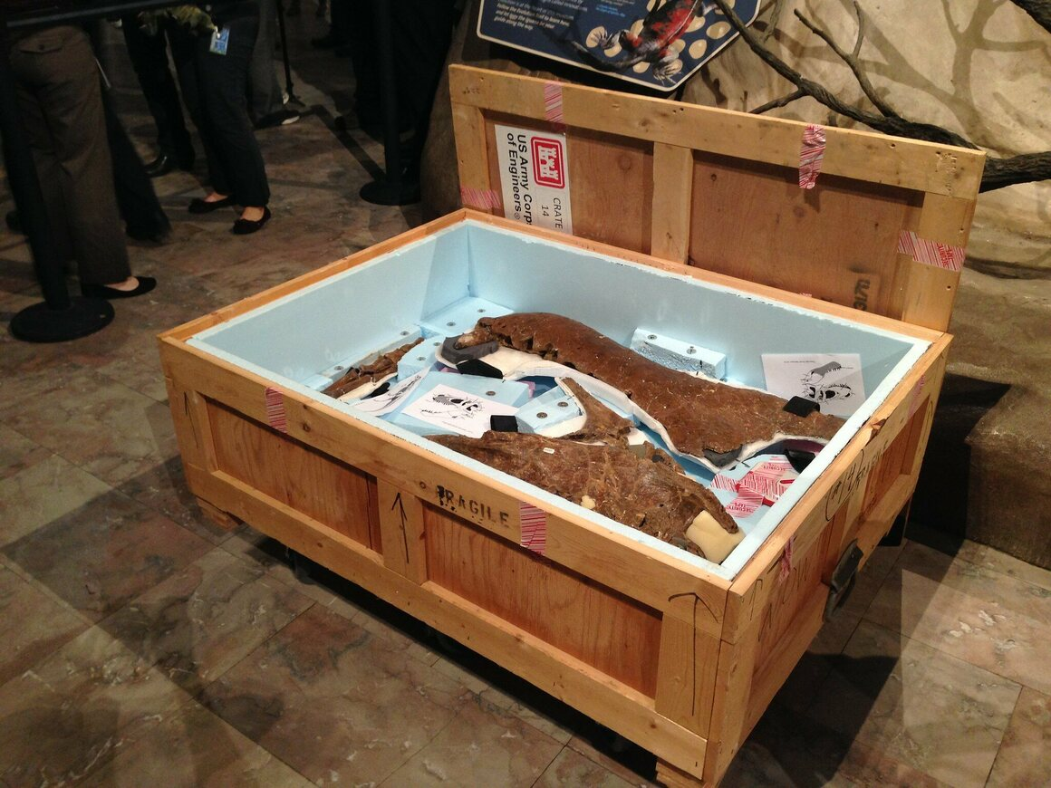 One of the 16 crates carrying Wankel's T. Rex, just unboxed at the Smithsonian.