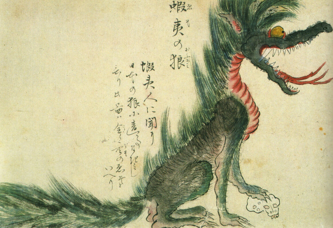 An Ezo wolf (a.k.a. Hokkaido wolf), which is believed to have become extinct in the late 19th century.