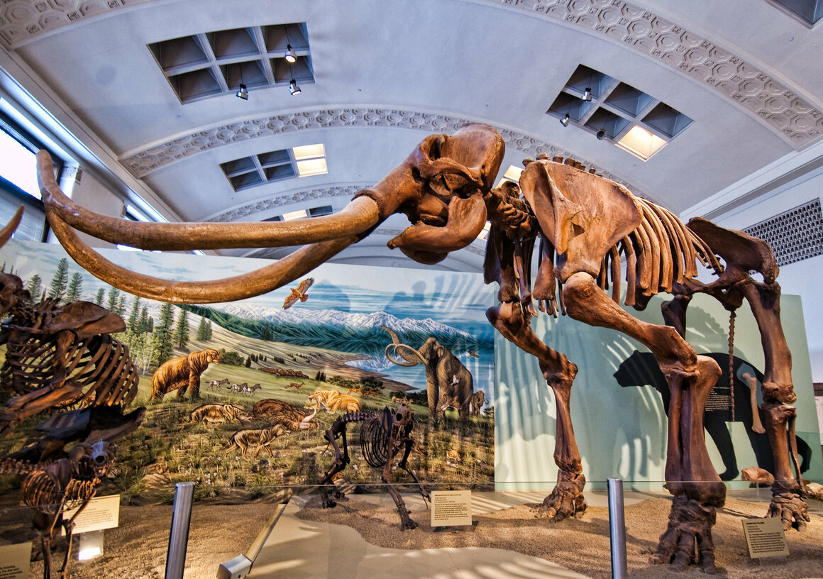 The Columbian mammoth, pictured here in a cast, left traces as it lumbered across the landscape. These days, it's easy to mistake them for dried puddles—or not notice them at all.