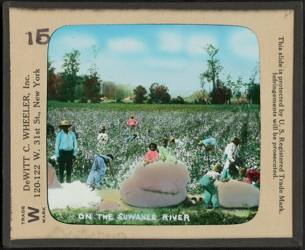 "This lantern slide image of African Americans picking cotton, titled ""On the Suwanee River,"" dates to the late-19th century."