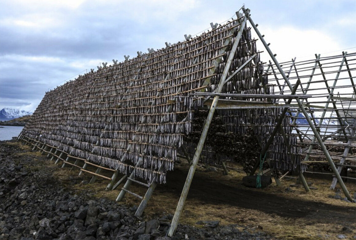 Stockfish—unsalted cod dried by cold air and wind on wooden racks on the foreshore, called <em>hjell</em>.