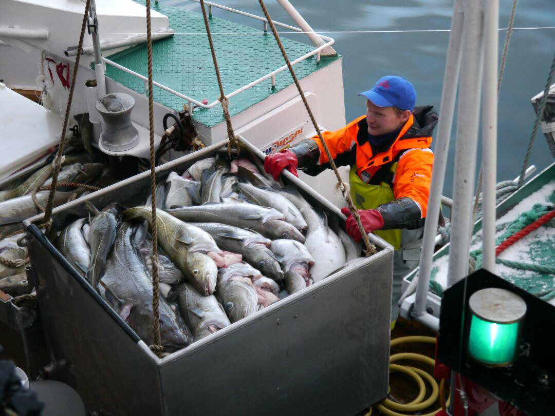 Will young Norwegians keep the stockfish lineage alive?