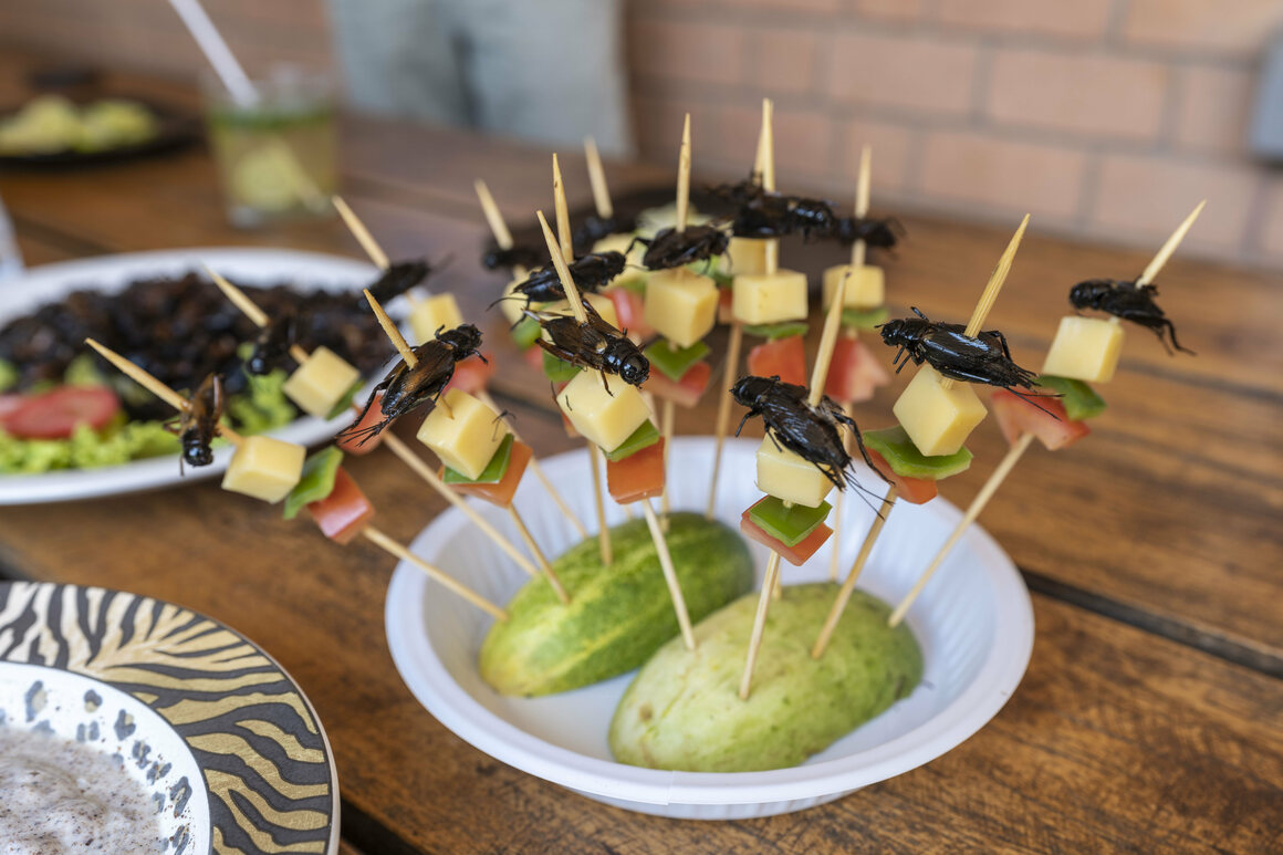 Fried cricket hors d'oeuvres are served to guests at Valala Farm, the commercial cricket-farming operation that entomologist Brian Fisher launched in Madagascar's capital, Antananarivo.