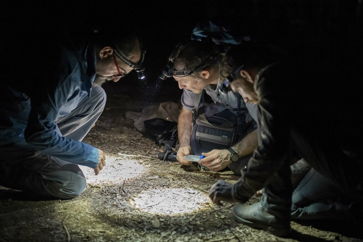 Sylvain Hugel, a cricket specialist, collects specimens in Kirindy Forest with Darren Goldin (left) and Aran Hinton of Canada's Entomo Farms.