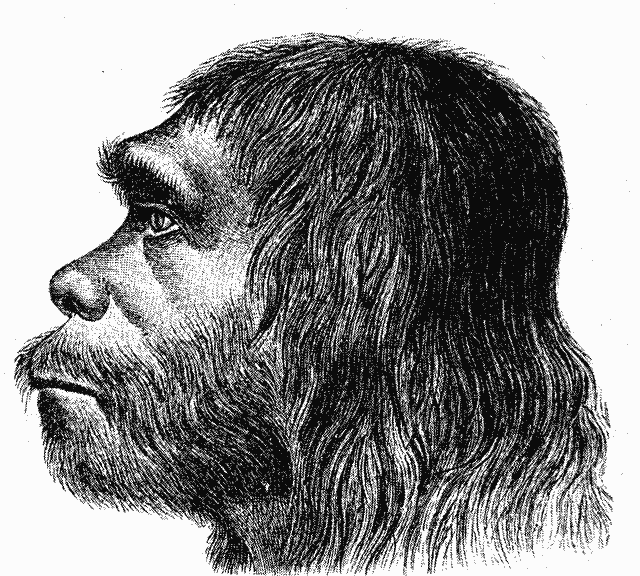 As early as 1888, the Neanderthals became more monkey-like than the early modern humans with whom they interfered.