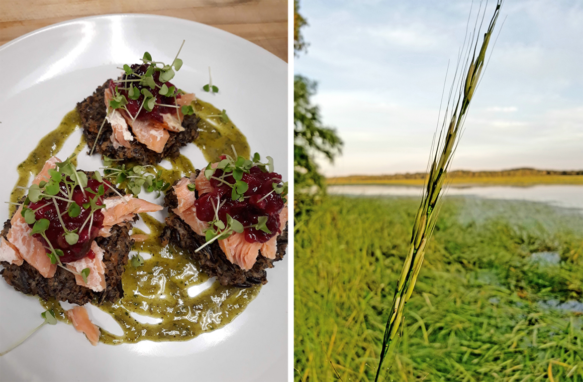 Albert's Red Lake Nation wild-rice fritters with smoked trout, cranberry black-walnut relish, and charred wild-onion vinaigrette (left). A wild rice stalk on the Mississippi River In Brainerd, Minnesota (right).