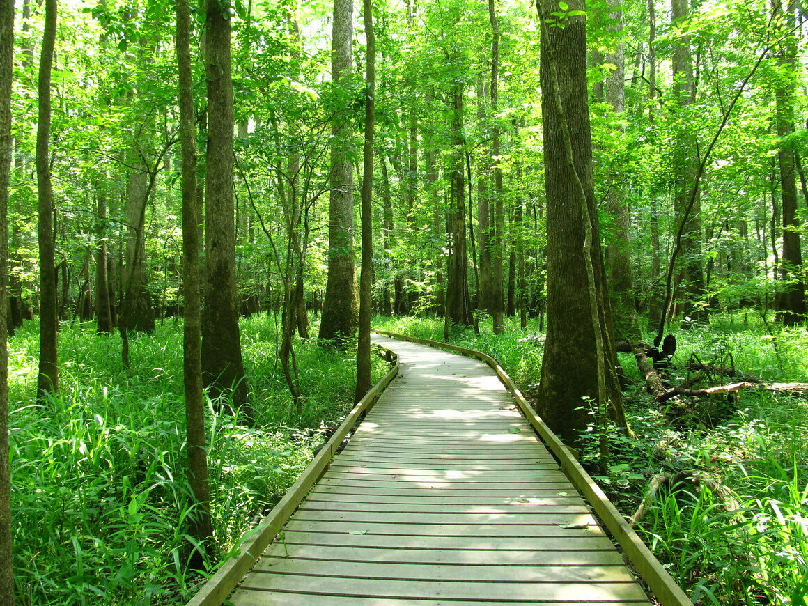 The landscape of Congaree is also plenty pretty when there's no sheen in sight.
