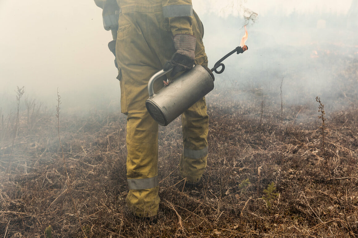 Nicolas Lindholm's small hand torch uses less fossil fuels than the large burners used by other blueberry farmers.