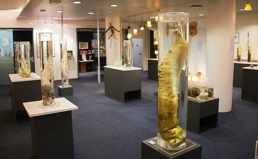 The Icelandic Phallological Museum in Reykjavík is dedicated to penises and penile parts.