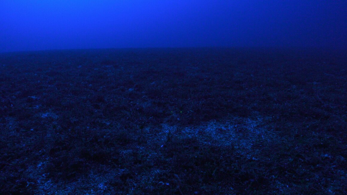 """The purplish glow of the ocean's mesophotic (""""middle light"""") zone gives rise to its nickname: the twilight zone. Sandwiched between the sunlit shallows and pitch-black deep, this layer sits roughly 100 to 500 feet underwater. This is a """"lights off"""" view of the South Diamond Islet Reef."""