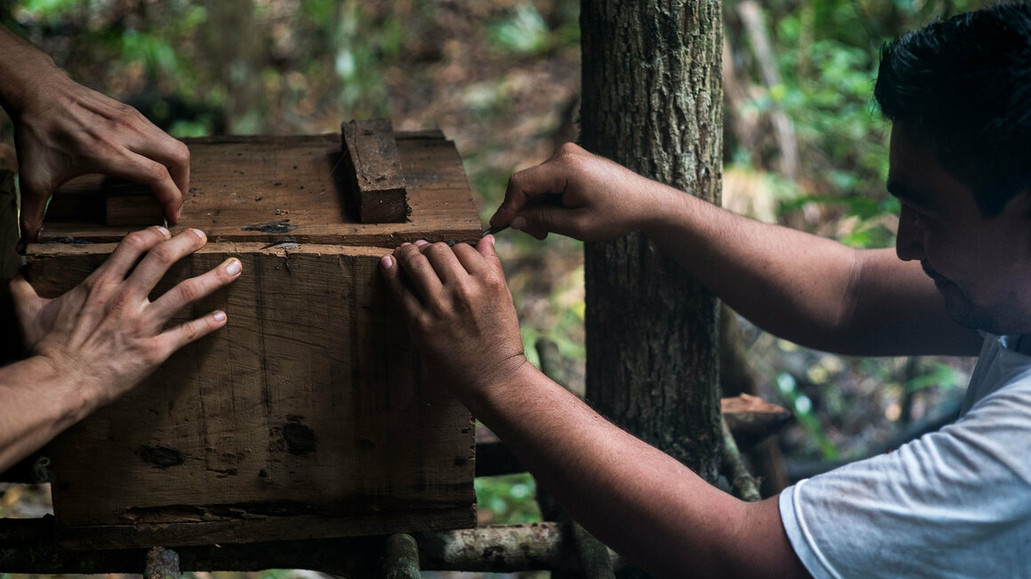 Cab checks on his hives periodically, to monitor their health and harvest some honey.