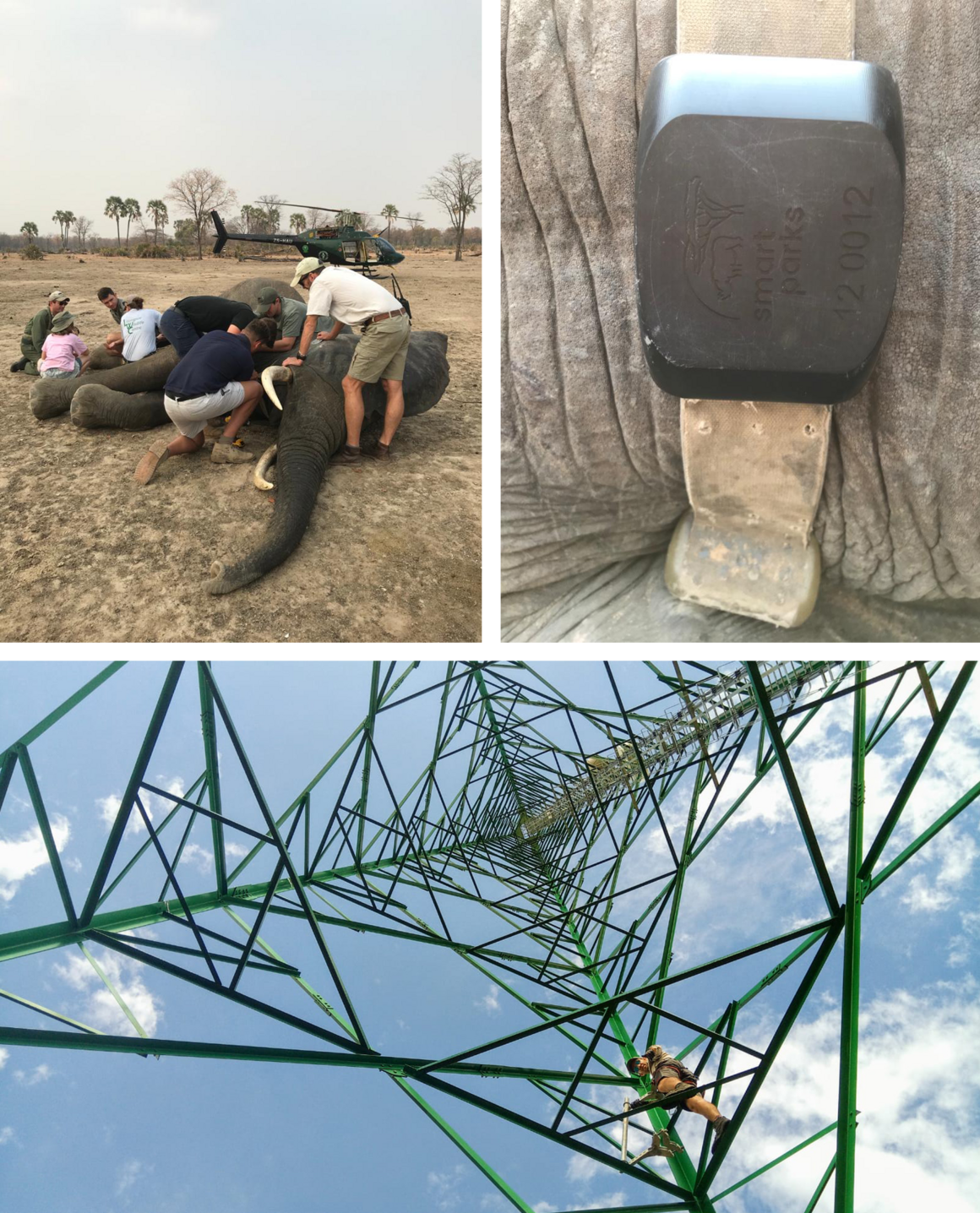 Wildlife managers tag an elephant with a LoRa sensor (top); a LoRa tower in Akagera National Park (bottom).