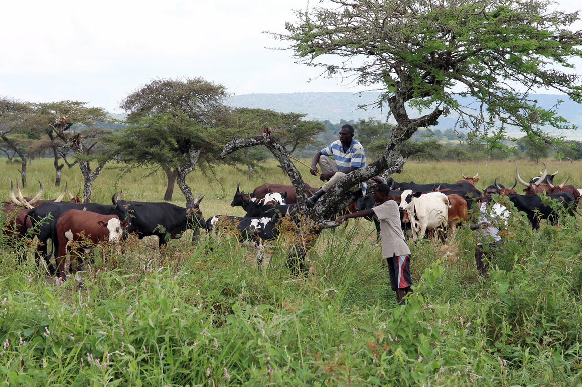 A cattle herder outside Akagera in 2015.