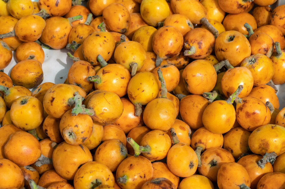Imperfect loquats in Spain, still delicious.