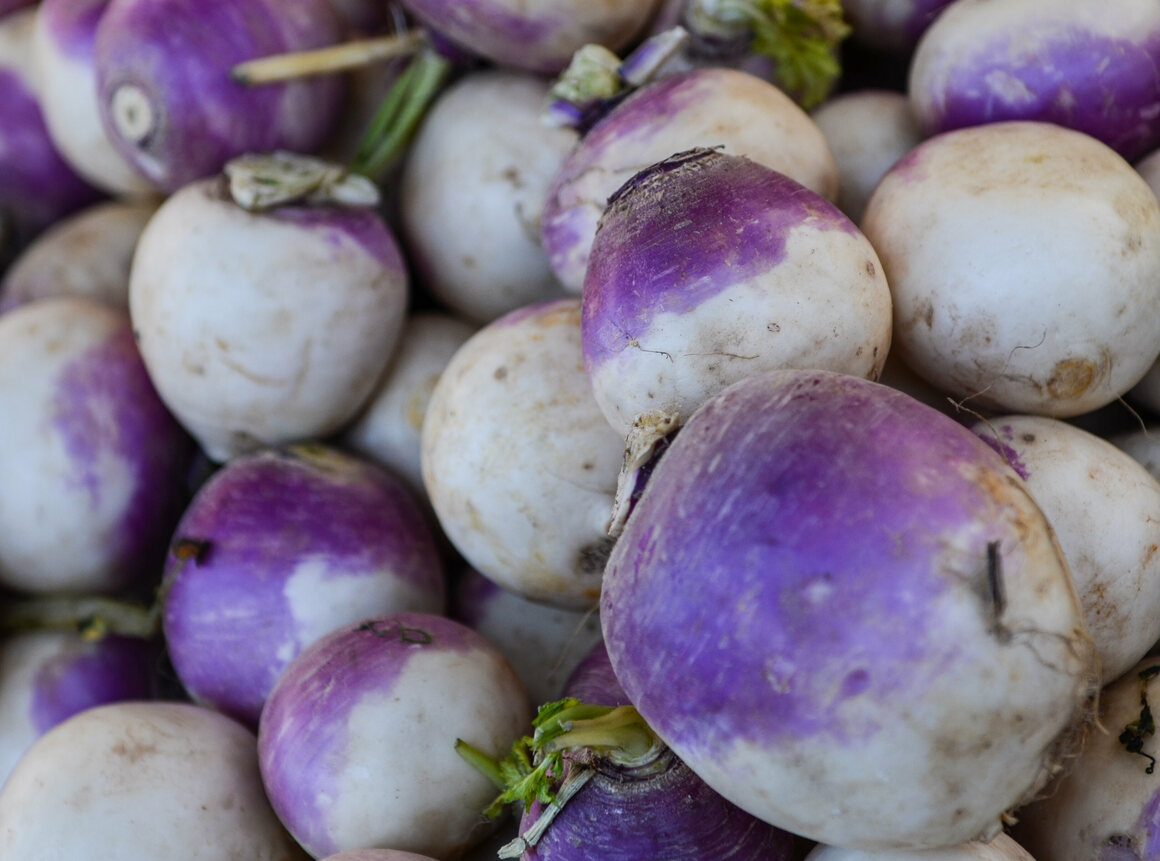 Genetic research indicates that the turnip was likely the first <em>Brassica rapa</em> crop, originating up to 6,000 years ago in Central Asia.