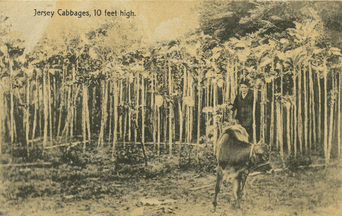An old postcard showing a grove.