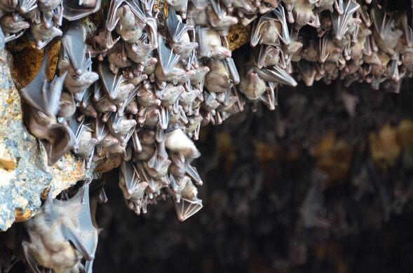 The bats of Pura Goa Lawah