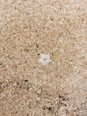 A hidden fossil