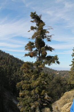 A tree grows right in the trace of the San Andreas