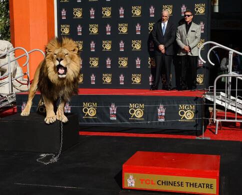 """Major as """"Leo"""" the MGM Lion"""