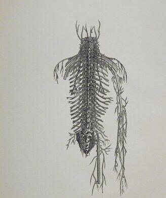 "A beautiful illustration from Vesalius' most famous text, ""De Humani Corporis Fabrica Libri Septem."""