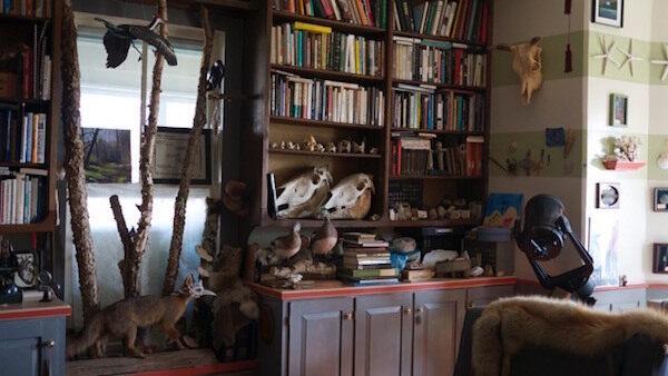 Elkin Cabinet of Curiosity
