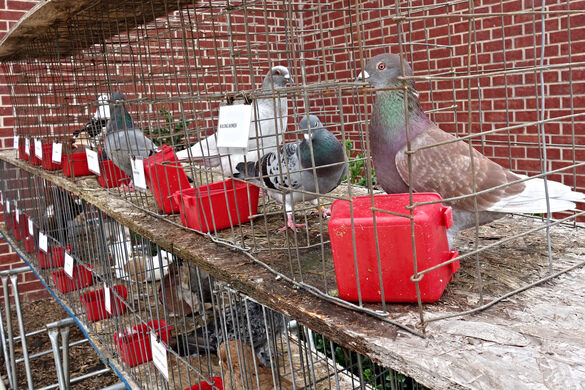 The American Pigeon Museum