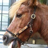 Profile image for ponyprincesslac