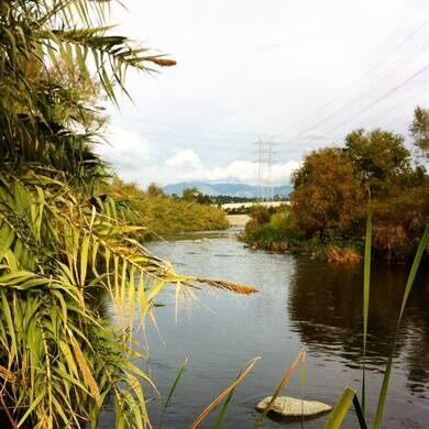 The LA River