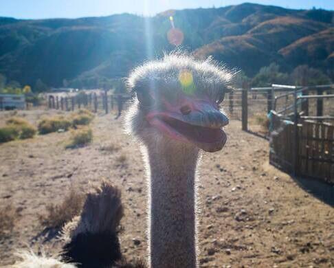 Quail Run Ostrich Ranch